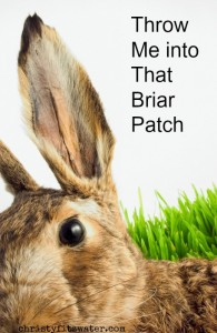 Throw Me into That Briar Patch  -christyfitzwater.com