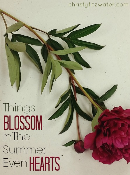 Things Blossom in The Summer, Even Hearts -christyfitzwater.com